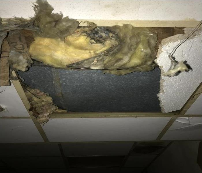 Mold in your Ceiling