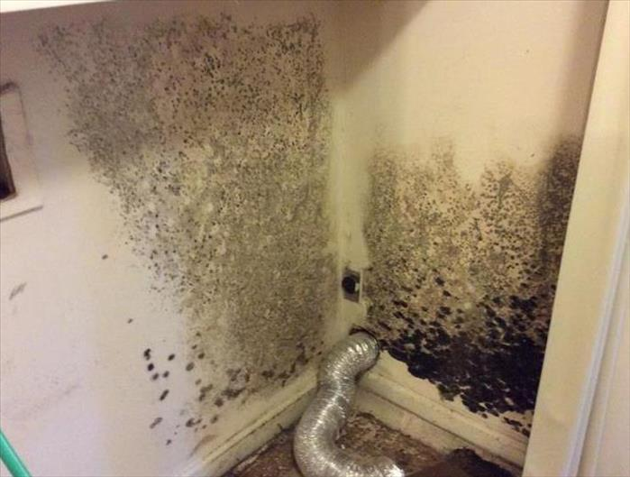 Mold Remediation Break the Mold