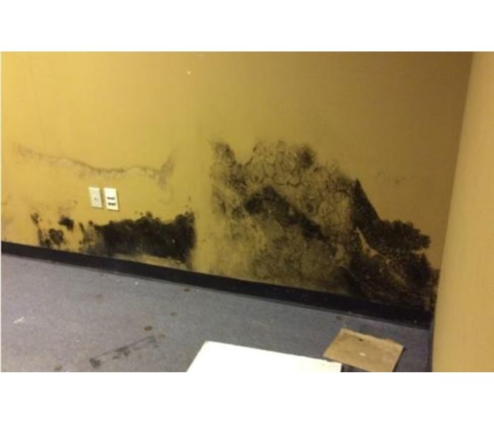 Mold Remediation Facts about Mold